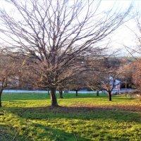 Magnifique terrain consteructible à 5minutes d'Yverdon